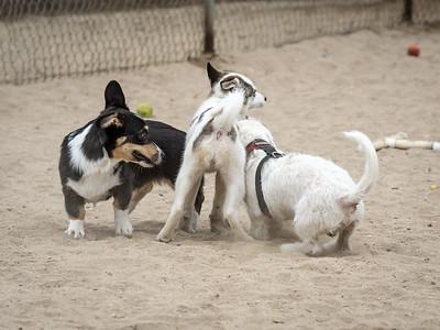 July 26: Dog Park