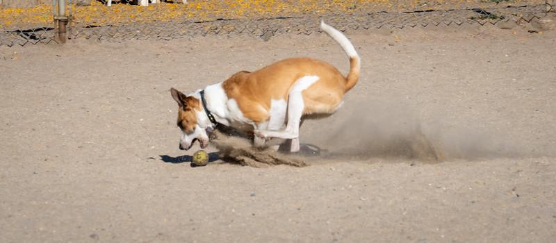 July 5: Dog Park