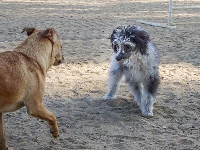 June 14: Dog Park