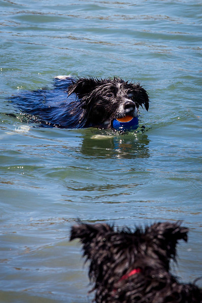 Caitlin took to swimming for balls - regardless of who owned them!