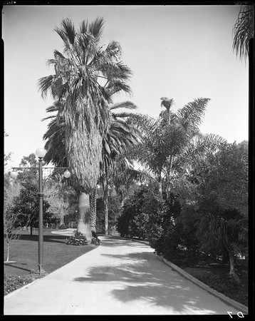 Driveway, Doheny Ranch, near Doheny Road, Beverly Hills, Calif., ca. 1915-1930s?
