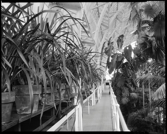 Palm house, Doheny Mansion, Chester Place, Los Angeles, Calif., ca. 1930