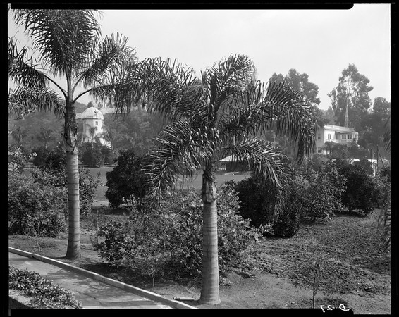 Landscaping, Doheny Ranch, near Doheny Road, Beverly Hills, Calif., ca. 1915-1930s?