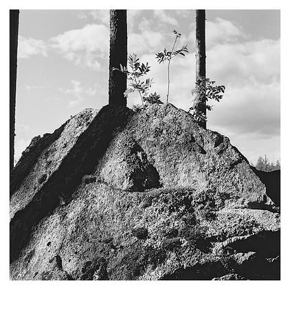 Fels im Wald bei Munkfors, Värmland (Schweden), 14. August 2016