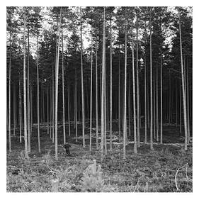 Eisel rennt in den Wald bei Munkfors, Värmland (Schweden), 14. August 2016