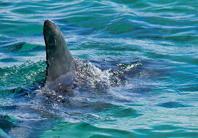 Dolphin20