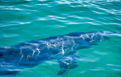 Dolphin25