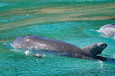 Dolphin14