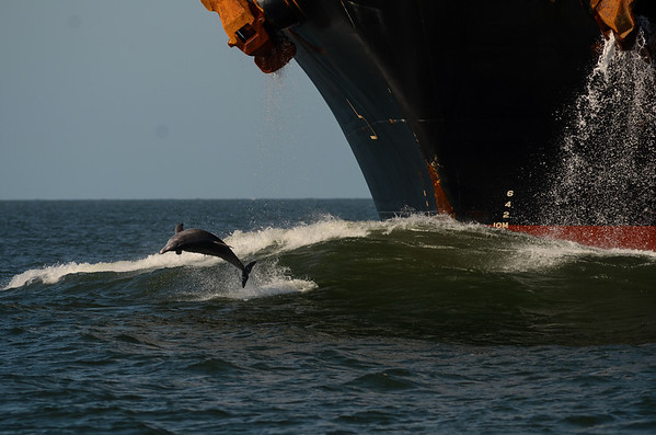 Dolphin and ship