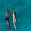 dolphin_sand