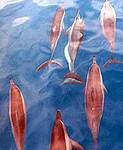 Dolphin Excursions on Kauai