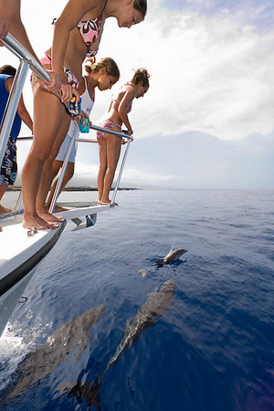 boaters enjoy a pod of bottlenose dolphins, Tursiops truncatus, bowriding<br /> Big Island, Hawaii ( Central Pacific Ocean ) MR
