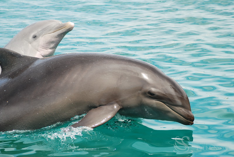 Two Dolphins Picture