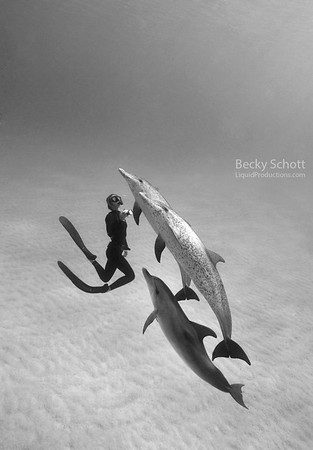 Dolphin dance vertical