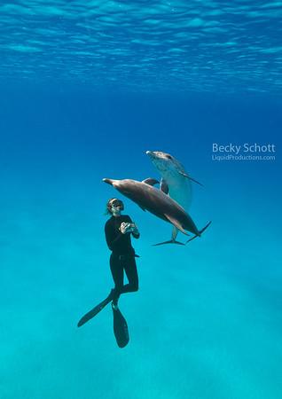 Dolphin twirls