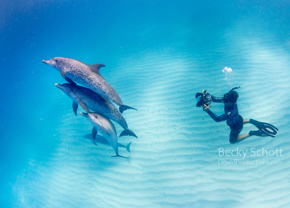 Freediver photographing dolphin pod
