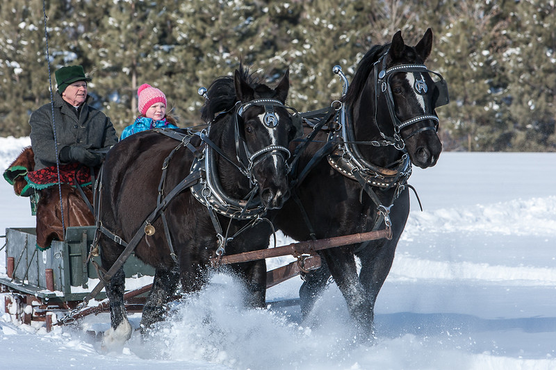 Maines and Tails Harness Club Sleigh Rally, 2014