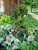 Hinoki and Alliums
