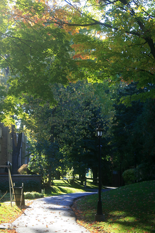 Autumn Afternoon at Bayview Mews #2