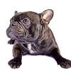 French bulldog & Pug mix