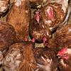 Butting Heads Farm