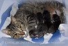 Tabby cat and kittens RELEASED