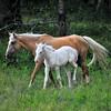 Horses<br /> Albion, Oklahoma<br /> 057-6518a