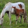 Horses<br /> Albion, Oklahoma<br /> 057-6494a