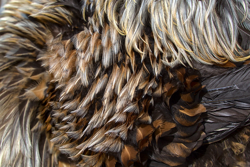Perry's complex plumage
