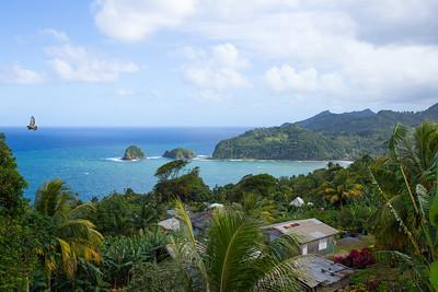 Dominica & AMERICAN TARZAN