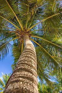 My Palm