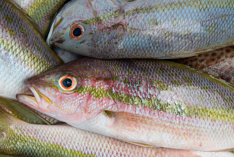 Fresh-caught colirubio fish at Playa Rincón, Dominican Republic.