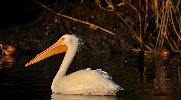 Don Edwards Baylands Preserve, Bay Area