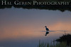 Black Necked Stilt Dawn<br /> Don Edwards Wildlife Refuge, Fremont, California<br /> 0710R-BNS2DP