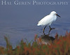 Snowy Egret<br /> Don Edwards Wildlife Refuge, Fremont, California<br /> 0710R-SE9C