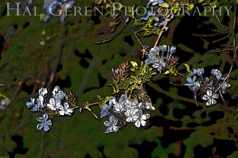 Don Edwards Wildlife Refuge, Fremont, California<br /> 0708R-F4E3