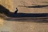 Rabbit Silhouette<br /> Don Edwards Wildlife Refuge<br /> 0708R-RS2