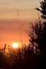 Sunrise<br /> Don Edwards Wildlife Refuge<br /> 0708R-S3