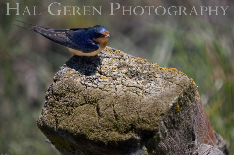 Don Edwards Natl Wildlife Refuge, Fremont, California<br /> 0706R-S2