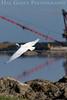 Great Heron Flight<br /> Don Edwards Wildlife Refuge<br /> 0707R-GH7