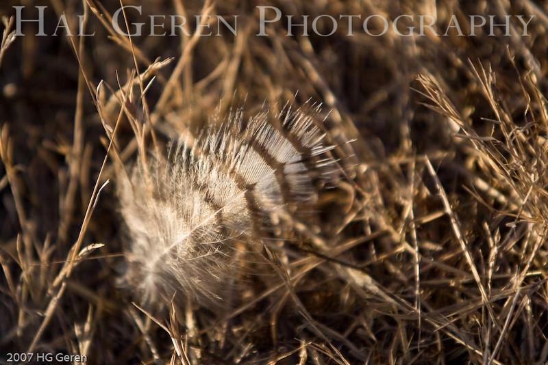 Don Edwards Wildlife Refuge, Fremont, California<br /> 0709R-F1
