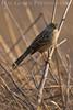 Don Edwards Wildlife Refuge, Fremont, California<br /> 0710R-BS3