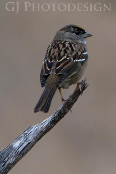 Don Edwards Nat'l Wildlife Refuge, Fremont, California<br /> 0811R-B2