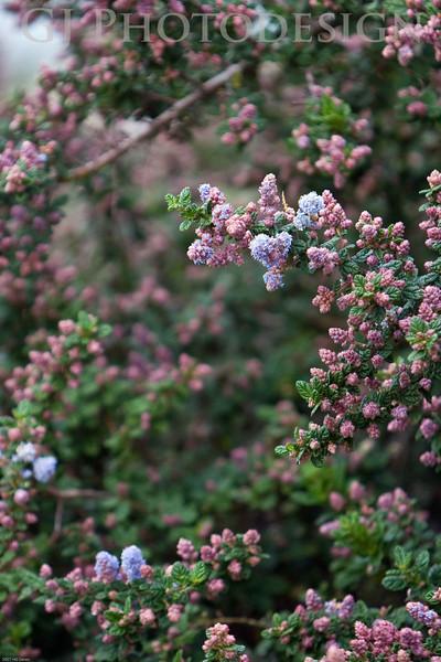 Don Edwards Nat'l Wildlife Refuge, Fremont, California<br /> 08103R-F9