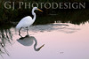 Snowy Egret<br /> Don Edwards Nat'l Wildlife Refuge, Fremont, California<br /> 0811R-SE7