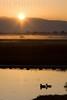 Sunrise over the Marsh<br /> Don Edwards National Wildlife Refuge<br /> 0811R-SOTFM1