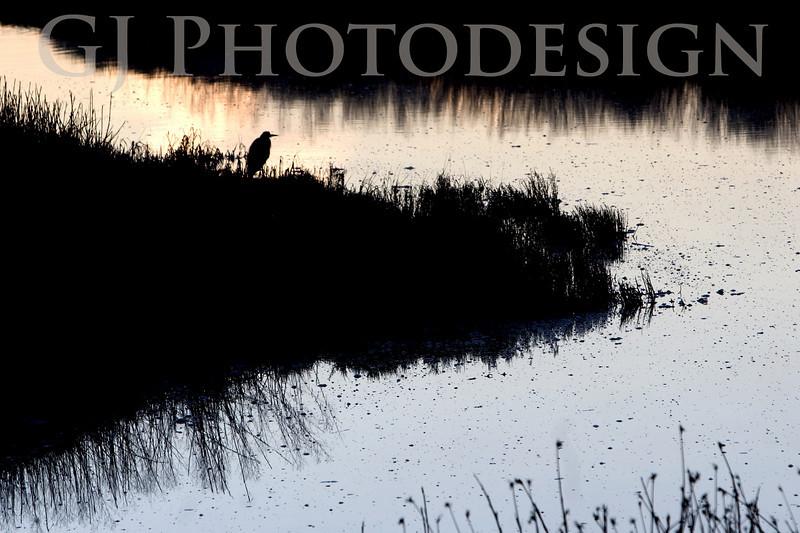 Blue Heron Silhouette<br /> Don Edwards Nat'l Wildlife Refuge, Fremont, California<br /> 0811R-BH13