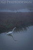 Great Egret<br /> Don Edwards Nat'l Wildlife Refuge, Fremont, California<br /> 0811R-GE7