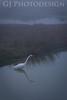 Great Egret<br /> Don Edwards Nat'l Wildlife Refuge, Fremont, California<br /> 0811R-GE7