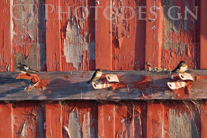 Don Edwards Nat'l Wildlife Refuge, Fremont, California<br /> 0807R-BOW1